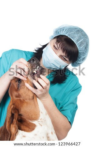 Vet checking a dog isolated