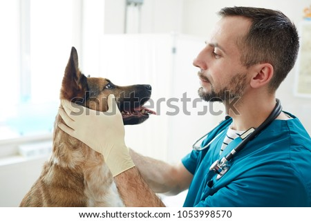 Vet doctor checking eyes of fluffy patient while holding its muzzle