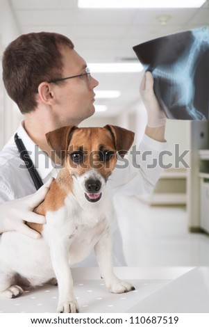 Vet doctor with dog Jack Russell terrier is scrutinizing dog's X-ray in veterinary clinic
