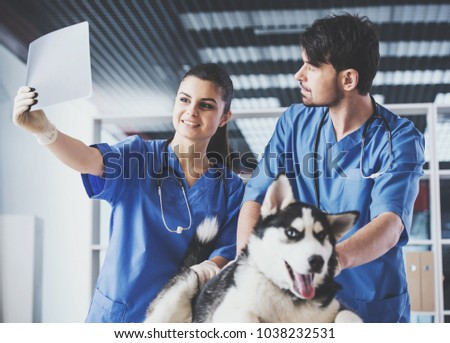 Vet doctors with dog are scrutinizing dog's X-ray in veterinary clinic.