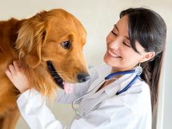 Vet examining a cute dog and smiling