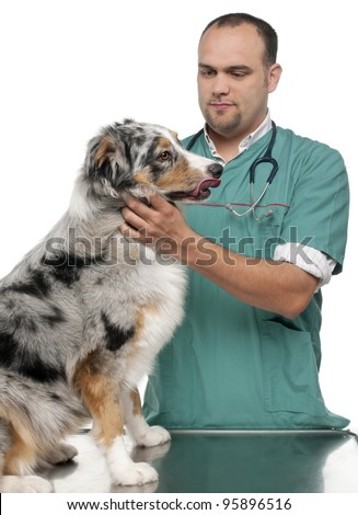 Vet examining an Australian Shepherd in front of white background - stock photo