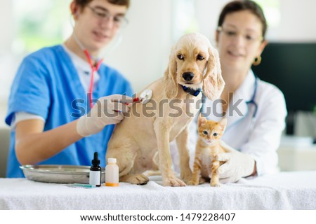 Vet examining dog and cat. Puppy and kitten at veterinarian doctor. Animal clinic. Pet check up and vaccination. Health care. Foto stock ©