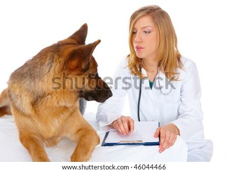 Vet examining her dog isolated on white