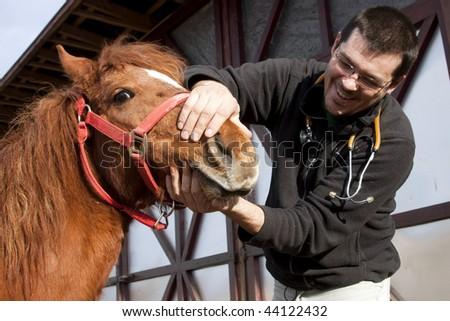 Vet examining horse teeth