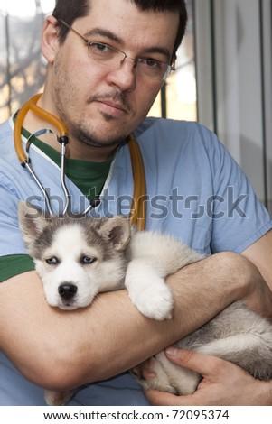 Vet examining husky puppy at a small animal clinic