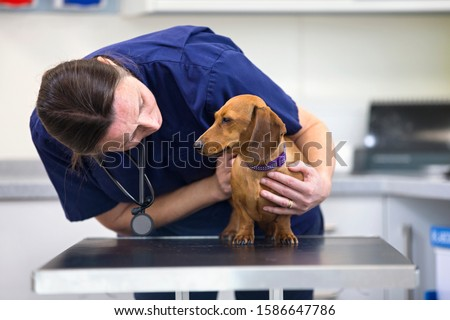 Vet examining pet dog on table in consulting room in surgery