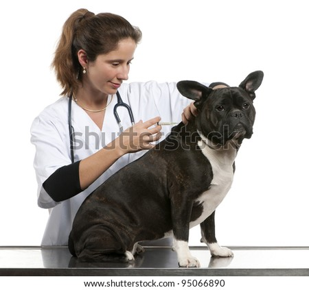 Vet giving an injection to a Crossbreed dog, dog in front of white background - stock photo