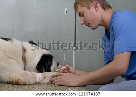 Vet giving injection with syringe to the dog - stock photo