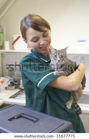 Vet Holding Cat In Surgery