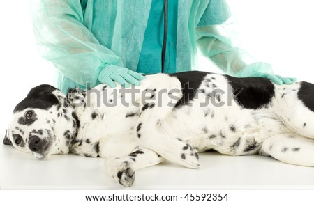 vet in green uniform and protective gloves with dog in surgery
