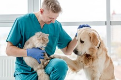 Vet with dog and cat in clinic