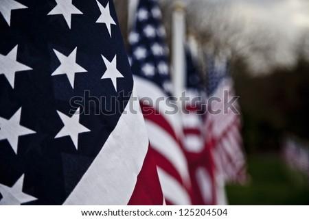 Veteran\'s Day Flags