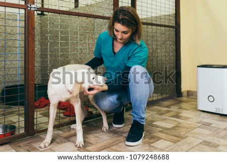 Veterinarian at animal shelter with a dog for adoption. #1079248688