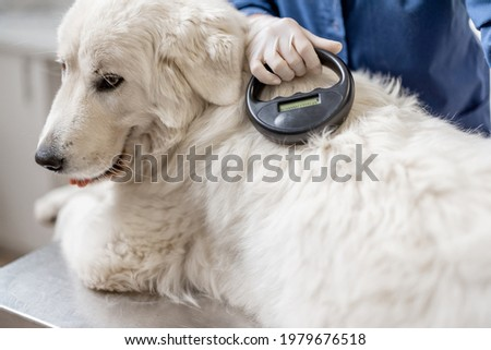 Veterinarian checking microchip implant under sheepdog dog skin in vet clinic with scanner device. Registration and indentification of pets. Animal id passport. Stockfoto ©