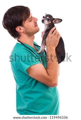 Veterinarian doctor holding a  chihuahua dog against white background
