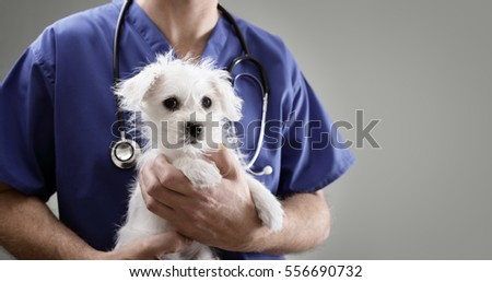 Veterinarian doctor holding and examining a Maltese Westie cross puppy with a stethoscope