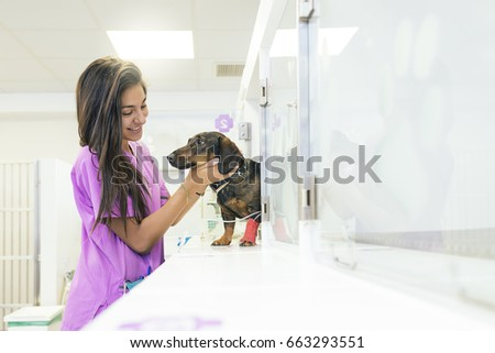 Veterinarian doctor hugging a beautiful dog. Veterinary Concept.