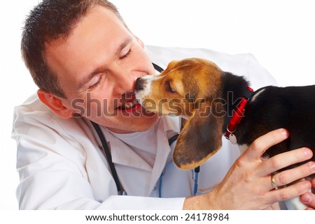 Veterinarian doctor making a checkup of a beagle puppy dog
