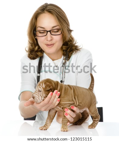 veterinarian doctor making a checkup of a sharpei puppy dog. isolated on white background