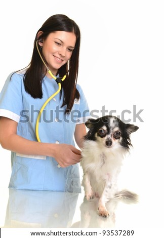 veterinarian doctor with dog