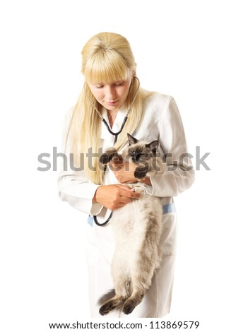 Veterinarian examines a cat with a stethoscope