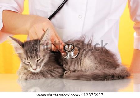 Veterinarian examining a kitten on yellow background
