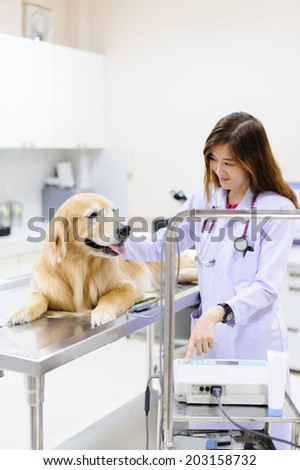 veterinarian examining cute golden retriever at hospital