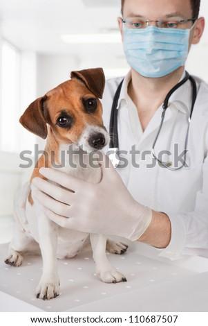 veterinarian examining dog