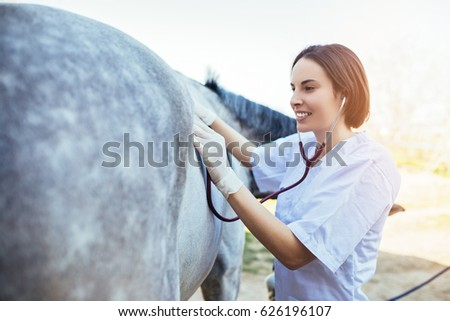 Veterinarian examining horse. Selective focus on vet's hand.