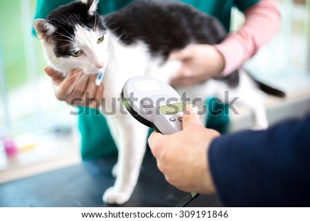 Veterinarian identify cat by microchip implant