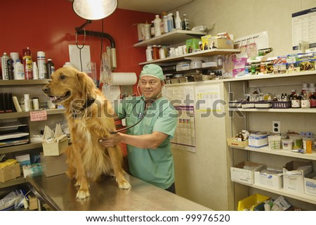 Veterinarian listening to a dog's heartbeat