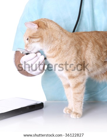 Veterinarian on white holding a orange cat - stock photo