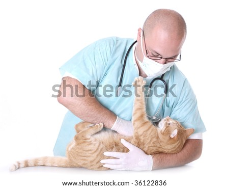 Veterinarian on white holding a orange cat