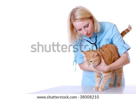 Veterinarian on white holding a orange cat