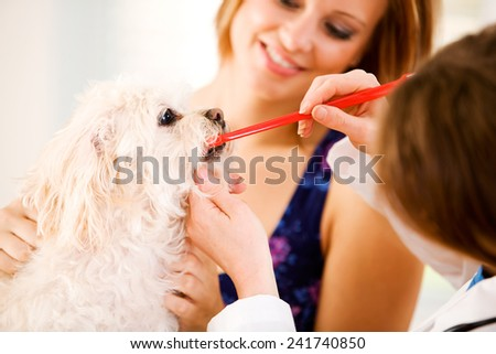 Veterinarian: Vet Shows Owner How To Brush Dog\'s Teeth