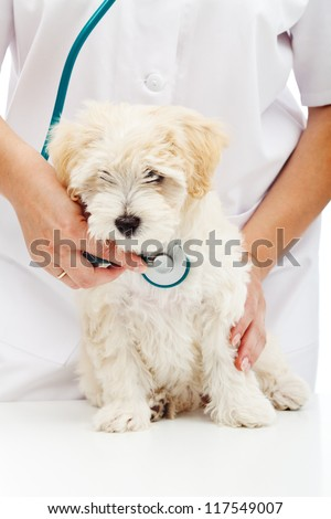 Veterinary care concept - small fluffy dog at health checkup