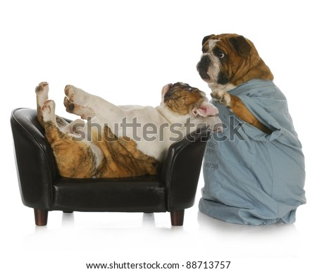 veterinary care - english bulldog doctor tending to sick bulldog laying on leather couch with reflection on white background