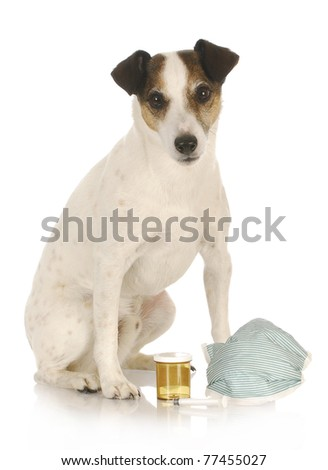 veterinary care - jack russel terrier sitting with medical supplies