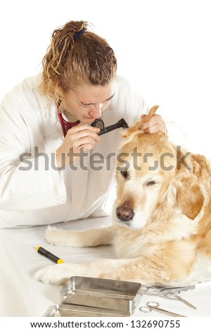 Veterinary consultation conducting a review on the ears of a dog