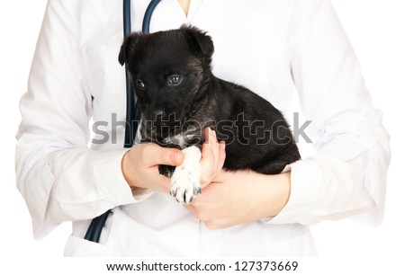 Veterinary doctor holding puppy isolated on white