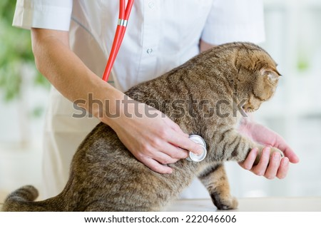 Veterinary doctor pet checkup with stethoscope