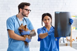 Veterinary doctor with assistant and little patient examining xray in animal clinic