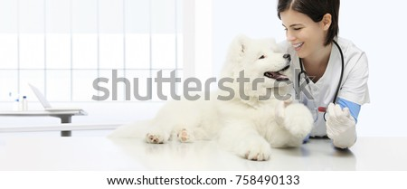 veterinary examination dog, blood test, veterinarian hand with syringe on table in vet clinic
