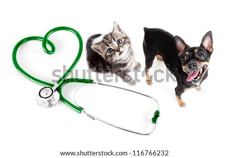 Veterinary for cats, dogs and other pets concept