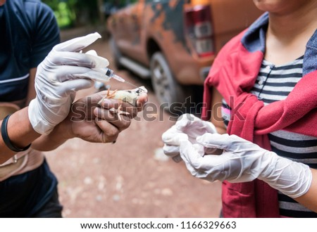 """Veterinary inject vaccine to chicken for prevent Poultry Diseases . Avian influenza is highly pathogenic avian influenza (HPAI). """"Bird flu"""" is a similar to """"swine ,"""" """"dog ,"""" """"horse ,"""" or """"human flu"""" . #1166329663"""