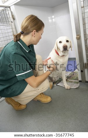 Veterinary Nurse Checking Sick Animals In Pens