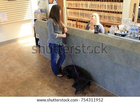 Veterinary Reception Desk