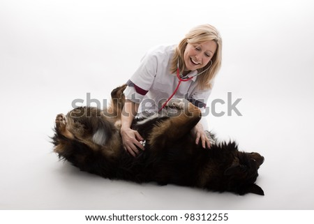 veterinary with dog