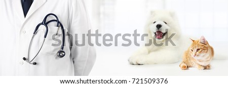 veterinary with stethoscope in pocket, dog and cat isolated on white, vet clinic banner concept
